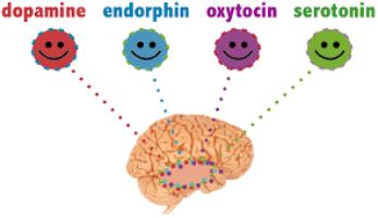 quimicas de la felicidad